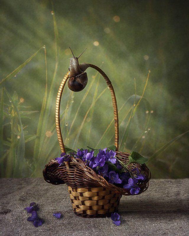 натюрморт, весна, букетик весенних цветов,фиалки, улитка, корзинка Навстречу утреннему солнышкуphoto preview