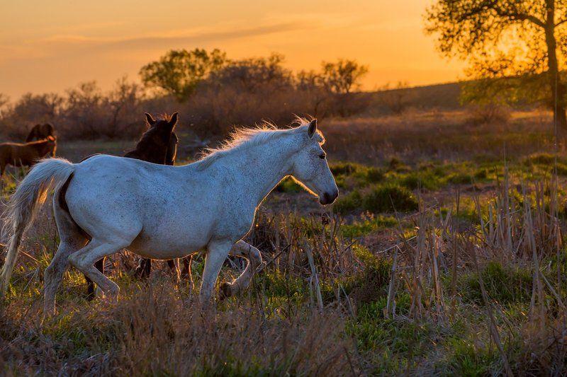лошадь, степь, астраханская область, закат, бег, свобода, весна, поволжье. Свободные духом.photo preview