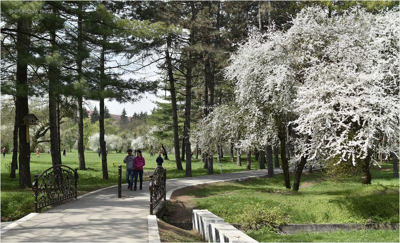 Бело-зелёная веснаphoto preview