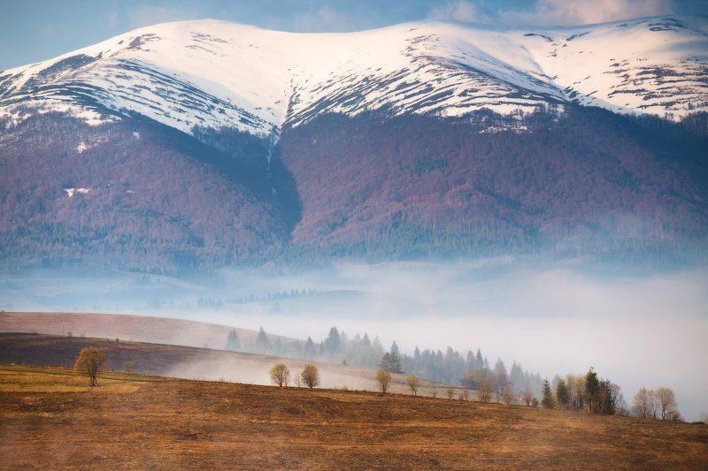 апрель, боржава, весна, горы, карпаты, пилипец, рассвет, утро Весеннее карпатское утроphoto preview