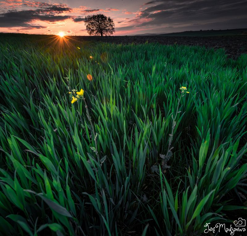 spring, sunset, field, nature, tree, grass, green Sprin is comingphoto preview