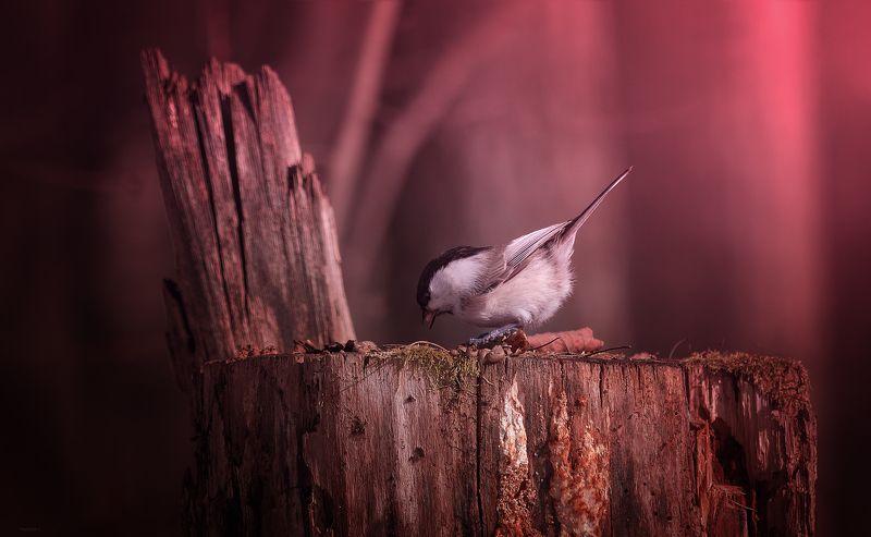 природа, лес, животные, птицы Весенние будниphoto preview