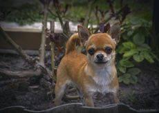Хозяин двора