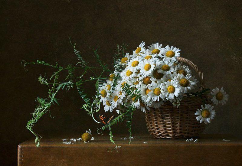 натюрморт, цветы, ромашки, лето Корзинка с ромашкамиphoto preview