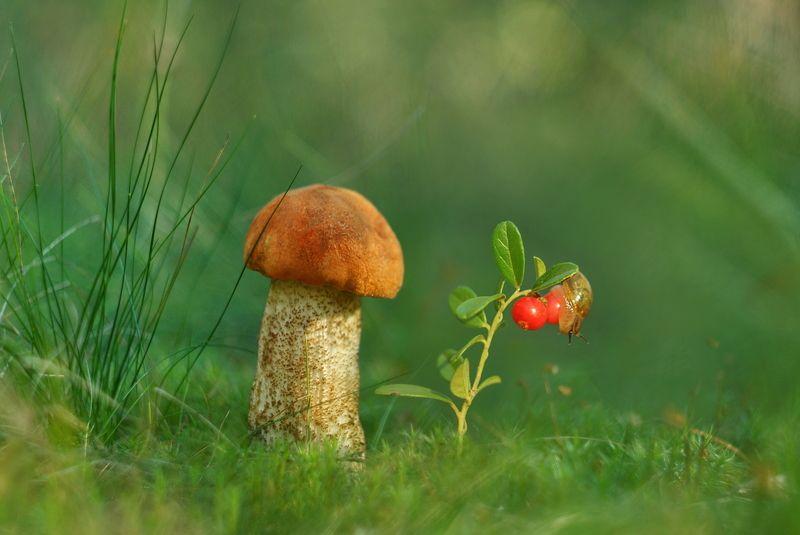 грибы, природа, гелиос На полянке спозаранкуphoto preview