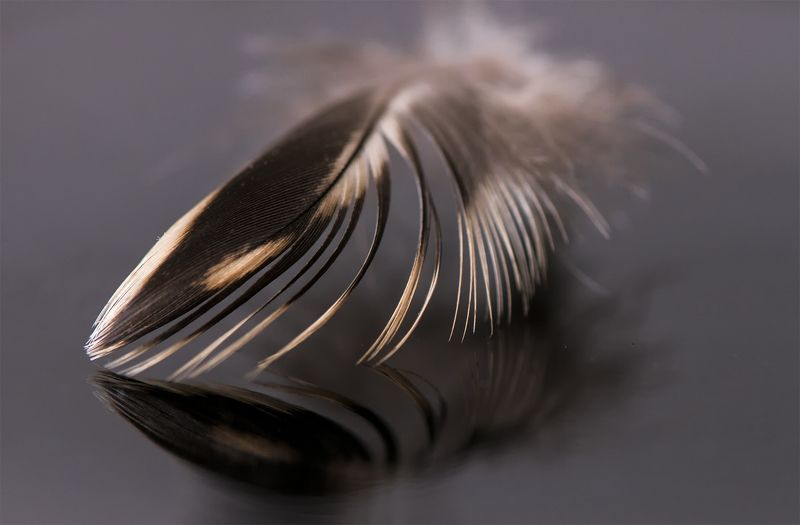 macro,black,brown,color,feather I\'m so light, so small ...photo preview