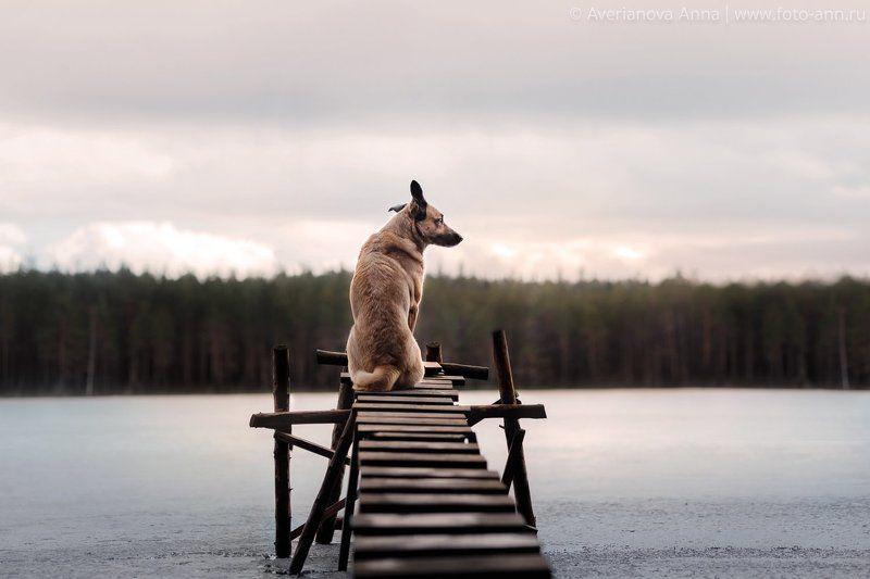 собака, природа, озеро Мечтатель photo preview