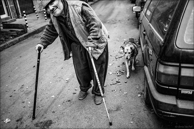 собака, Друзьяphoto preview