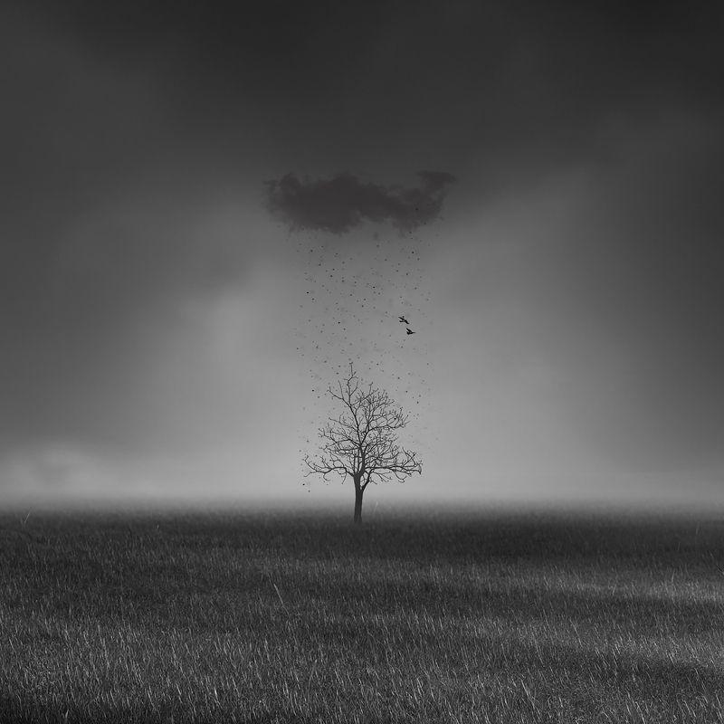 #man, #cloudly, #bnw, #fine_art, #sky, #cloud, #mehrzad_photo, #hossein_mehrzad, #black_and_white, #b&w, #editing, #photoshop, #creative, #photo_art, #digital, #mehrzad, #photography, #creative_art, #consept_art, #freedom, #woman, #blood, #pesonal, #crush Black rainphoto preview