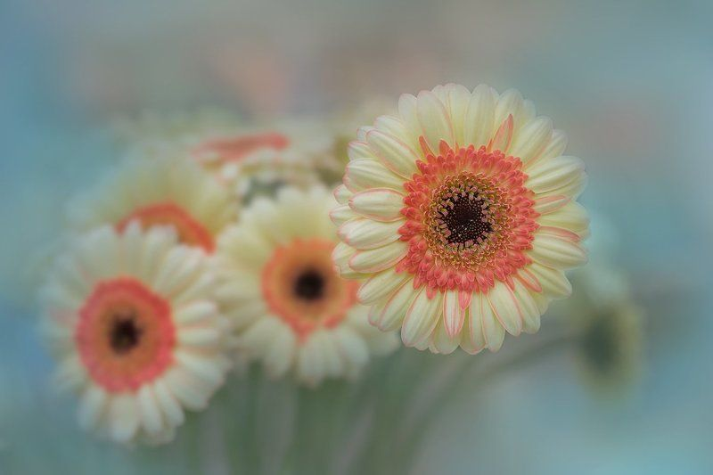 Цветок счастья и успехаphoto preview