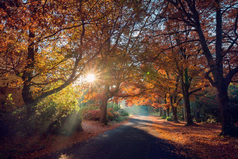 sunrise, morning, trees, autumn, red, road, blackheath, sun, mist, fog Autumnphoto preview
