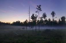 тихо в лесу...