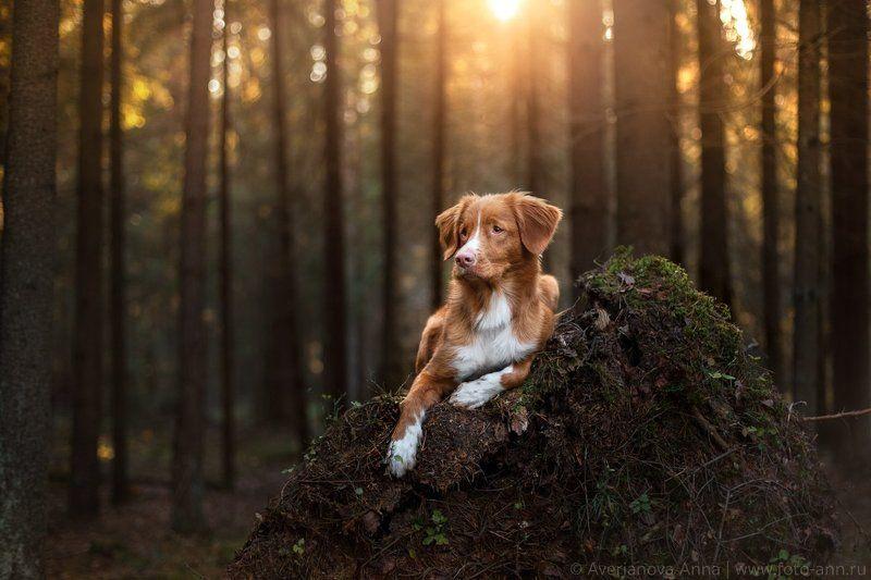собака, природа, лес photo preview
