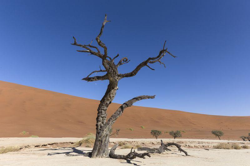 aerial, sossusvlei, desert, namib, namibia, landscape, african, nature, dunes, view, beautiful, wilderness, park, travel, national, orange, naukluft, scenic, sand, road, scenery, africa, flight, arid, red Namibia Sossusvleiphoto preview