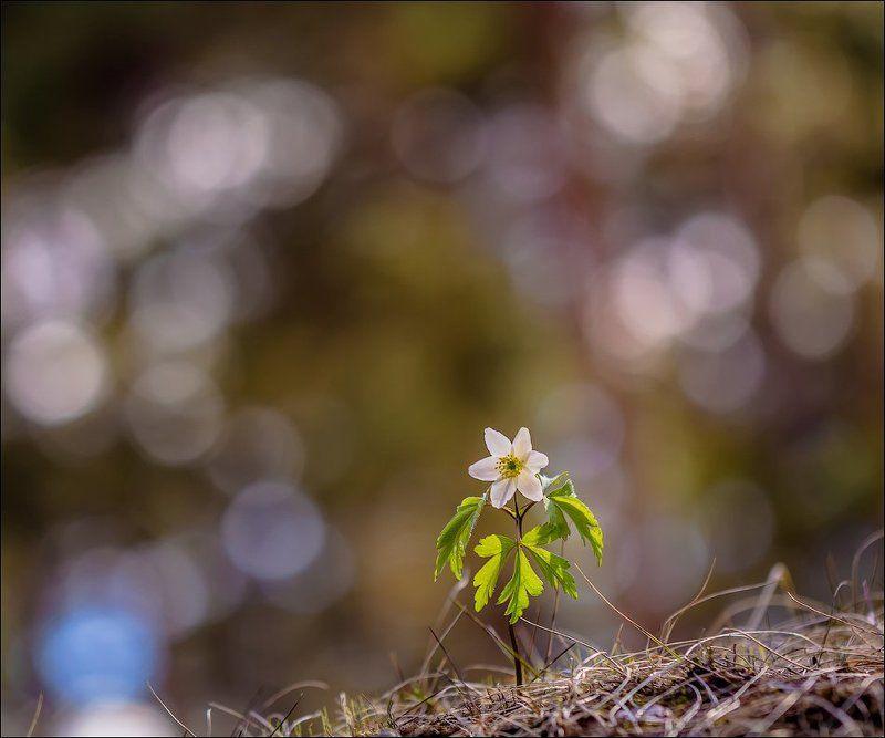 Такая поздняя весна)photo preview