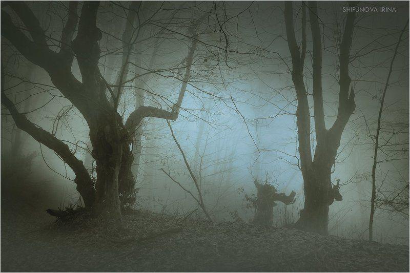 Мистический лес 6photo preview