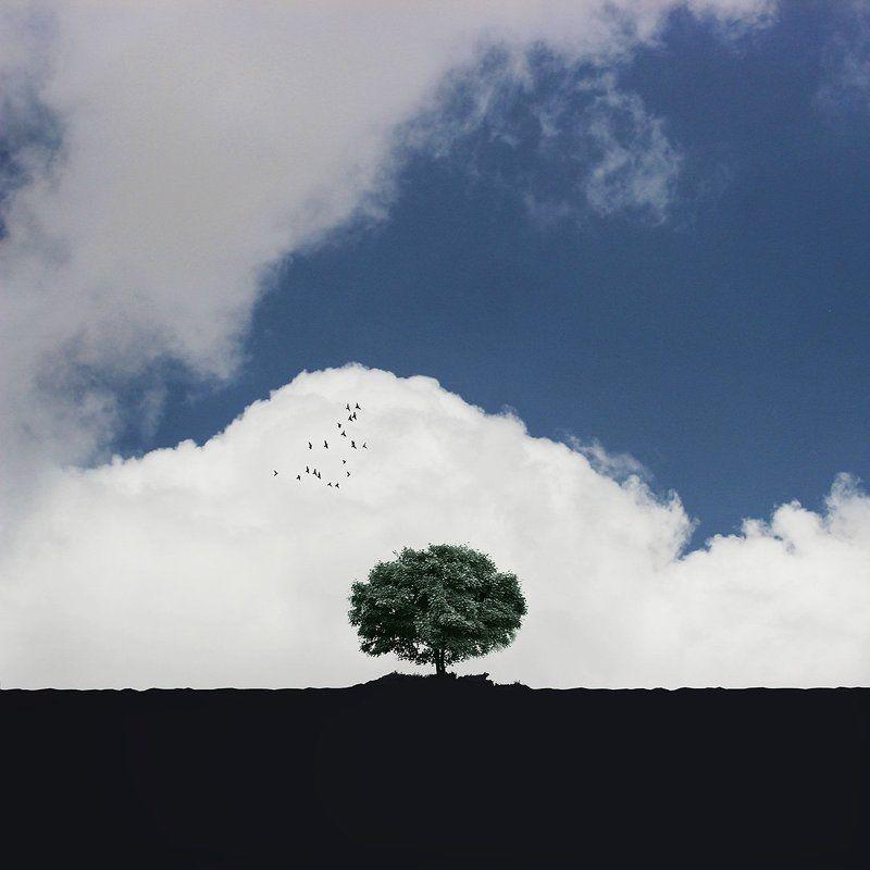 creative, fineart, conceptual, tree, gree, birds, landscape, blue, minimal,  Blueskyphoto preview