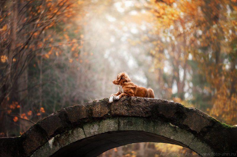 собака, природа, мост На мостуphoto preview