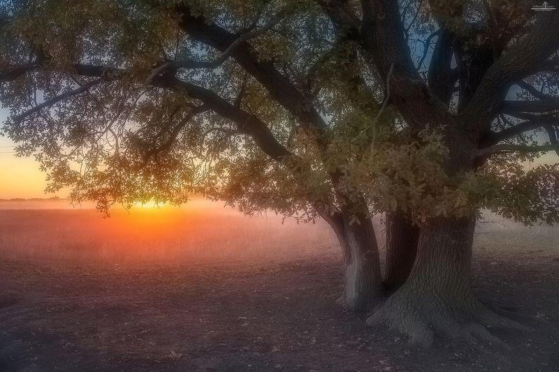 Из жизни дереваphoto preview