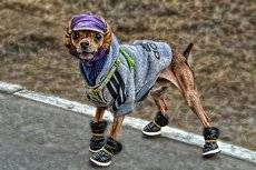 Гламурный пёс