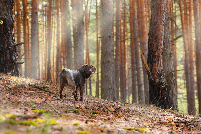 собака, животное, трава, ветки, весна, цветы Мой верный лучший другphoto preview