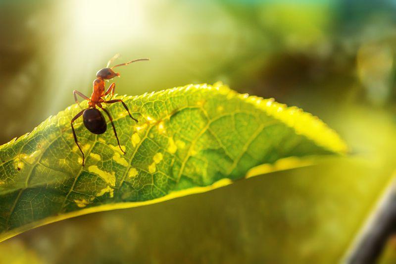 муха, жук, крылья, лист, хобот, свет, муравей, мошки, трава ***photo preview