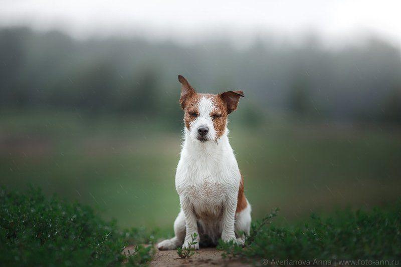 собака, дождь, природа, питер ...о погоде в Санкт-Петербуге =)photo preview