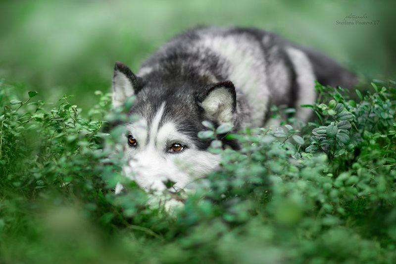 собака, лес, портрет, весна, кусты, брусника. Вдыхаем первые ароматы весны:)))photo preview