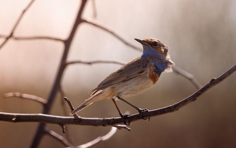 природа, лес, животные, птицы Анализатор весныphoto preview