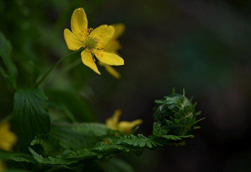 весна Весна в горахphoto preview