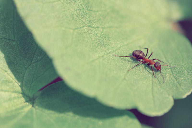 жук, кора, крылья, лапы, тень, черный, красный,цветы,свет,листья Другой мирphoto preview