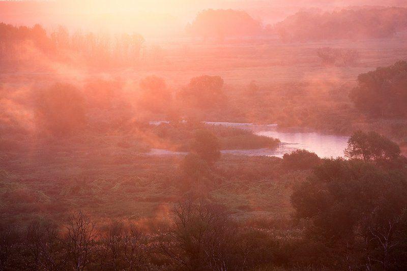 Розовое утро.photo preview