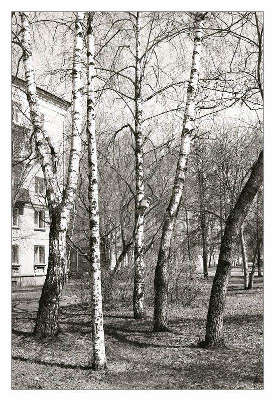 весна, апрель, черно-белое Черно-белая весна. Апрель.photo preview