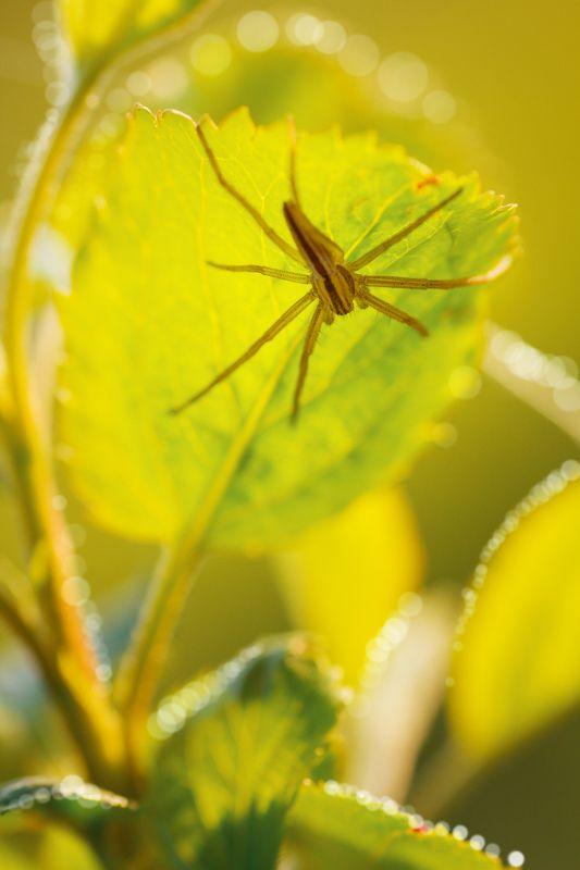 жук, кора, крылья, лапы, тень, черный, красный,цветы,свет,листья Вечерние дниphoto preview