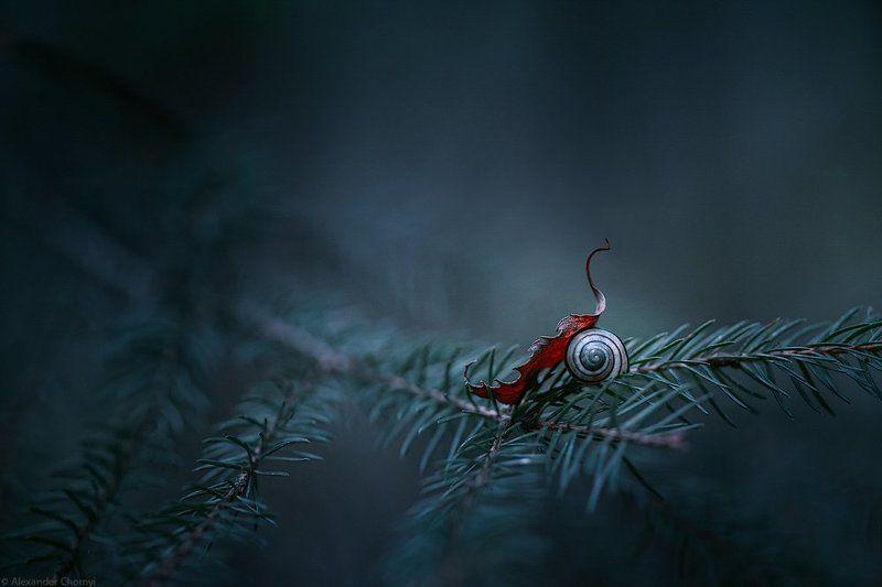 украина, коростышев, лето, лес, красота, макро, макро мир, природа, макро-красота, чорный, ***photo preview