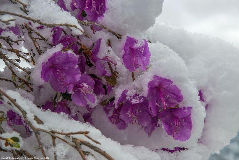 Укутанный зимойphoto preview