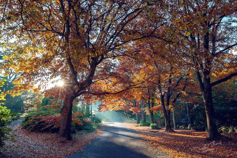Blackheath in Autumnphoto preview