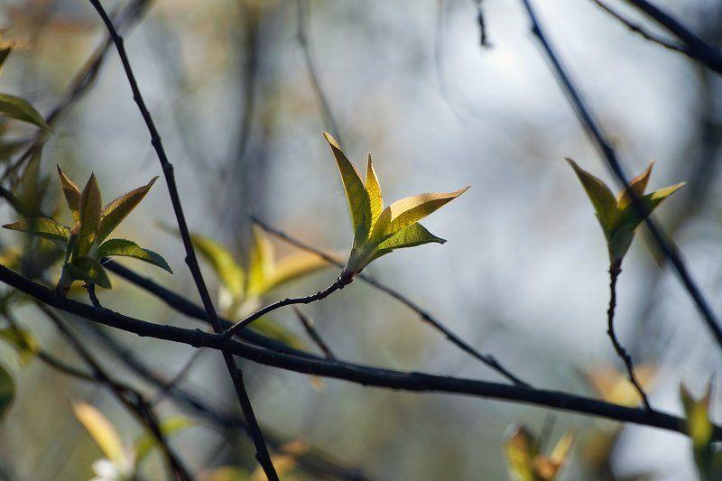 весна, первая зелень, листья, кроны, лес, мещёра, рязанская область Pro первую весеннюю зеленьphoto preview