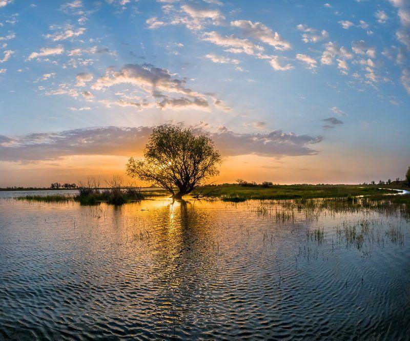 весна, половодье, астраханская область, волга, река, рассвет, дерево, облака, нерест, поволжье, вода. Начало половодья в нижнем Поволжье.photo preview