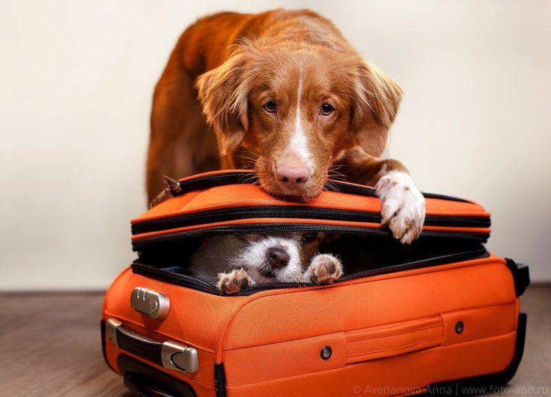 собака, путешествие  К отпуску готовы)photo preview