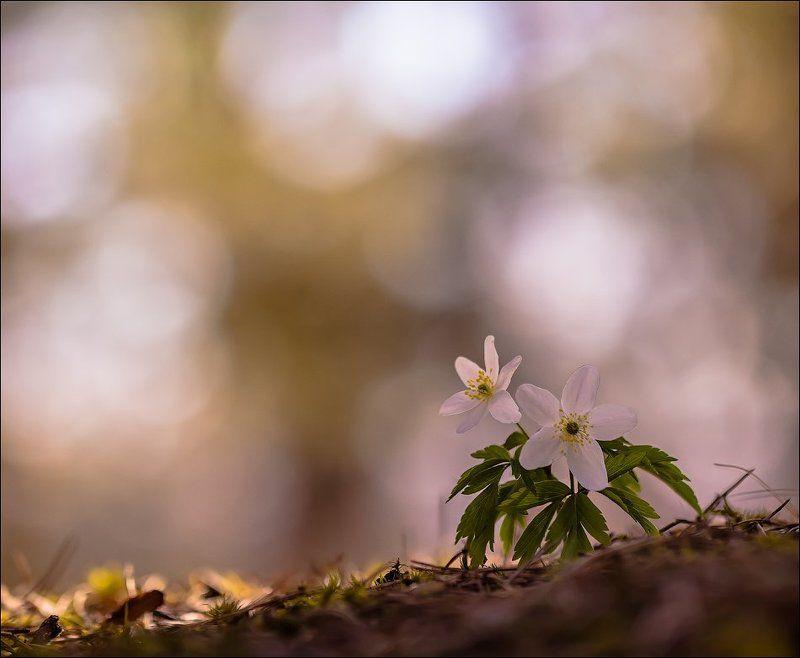 Весна....photo preview