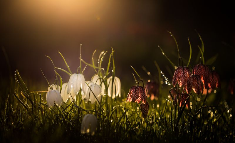 evening, light Evening lightphoto preview