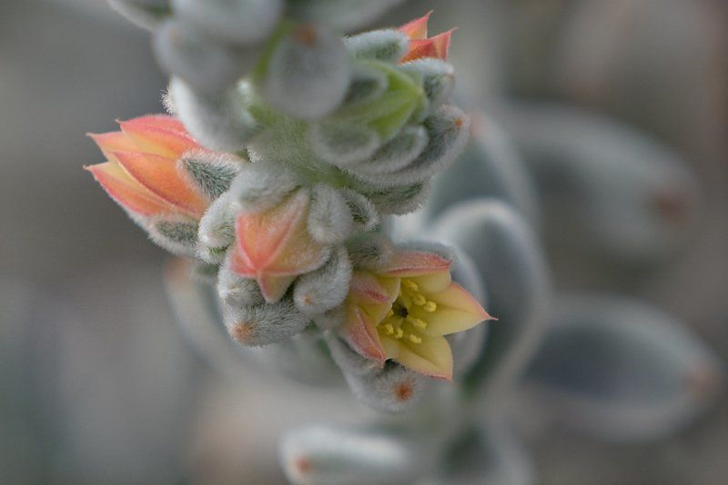 Цветок кактусаphoto preview