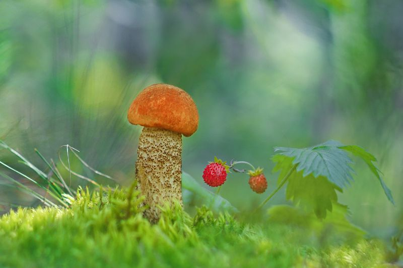 грибы, природа, гелиос Всегда красивый под осинойphoto preview