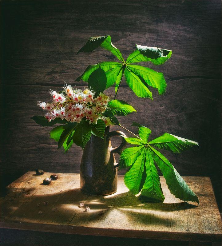 still life, натюрморт,  цветы, природа, весна, винтаж, цветы каштана, каштан, листья натюрморт с веткой каштанаphoto preview