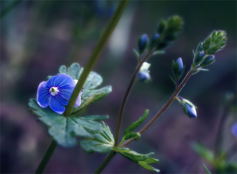 nature, природа, цветы, полевые цветы весенние зарисовкиphoto preview