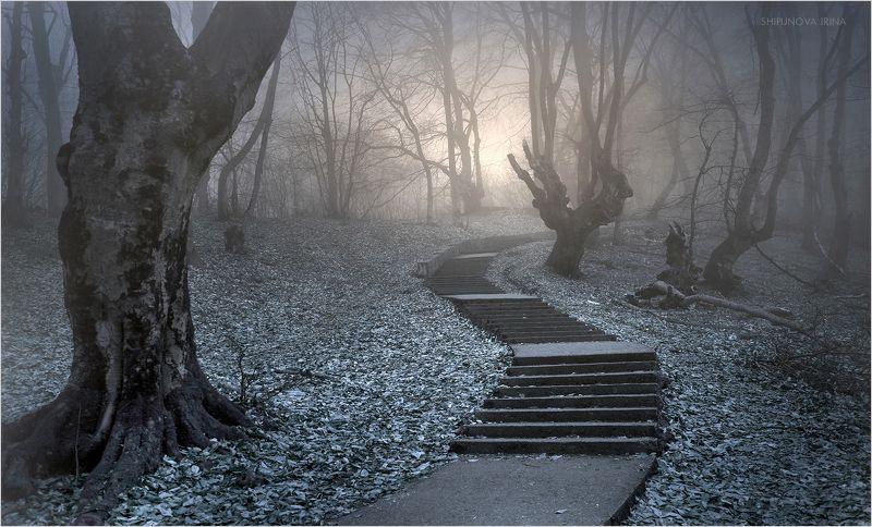 Мистический лес 7photo preview