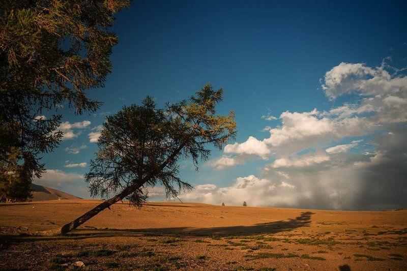 пейзаж, природа, вечер, теплый, Курай, Алтай, Сибирь, облака, дерево, падает, покосилось, синий, желтый, зеленый, красивая, большой, высокий Курайская степьphoto preview
