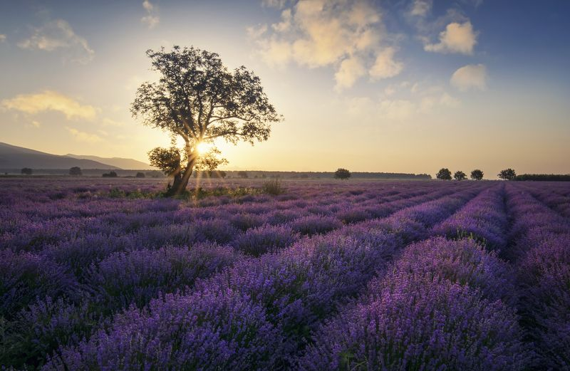 lavender, болгария, landscape, fields, sunrise Lavenderphoto preview
