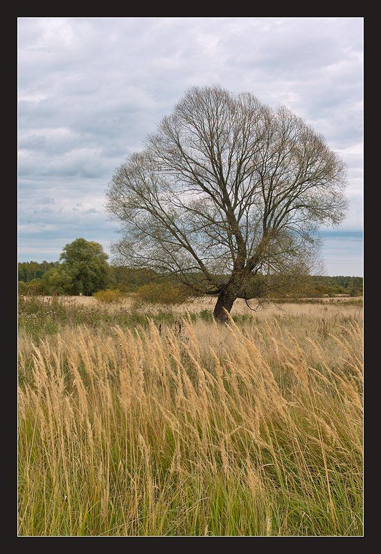 Дерево жизниphoto preview
